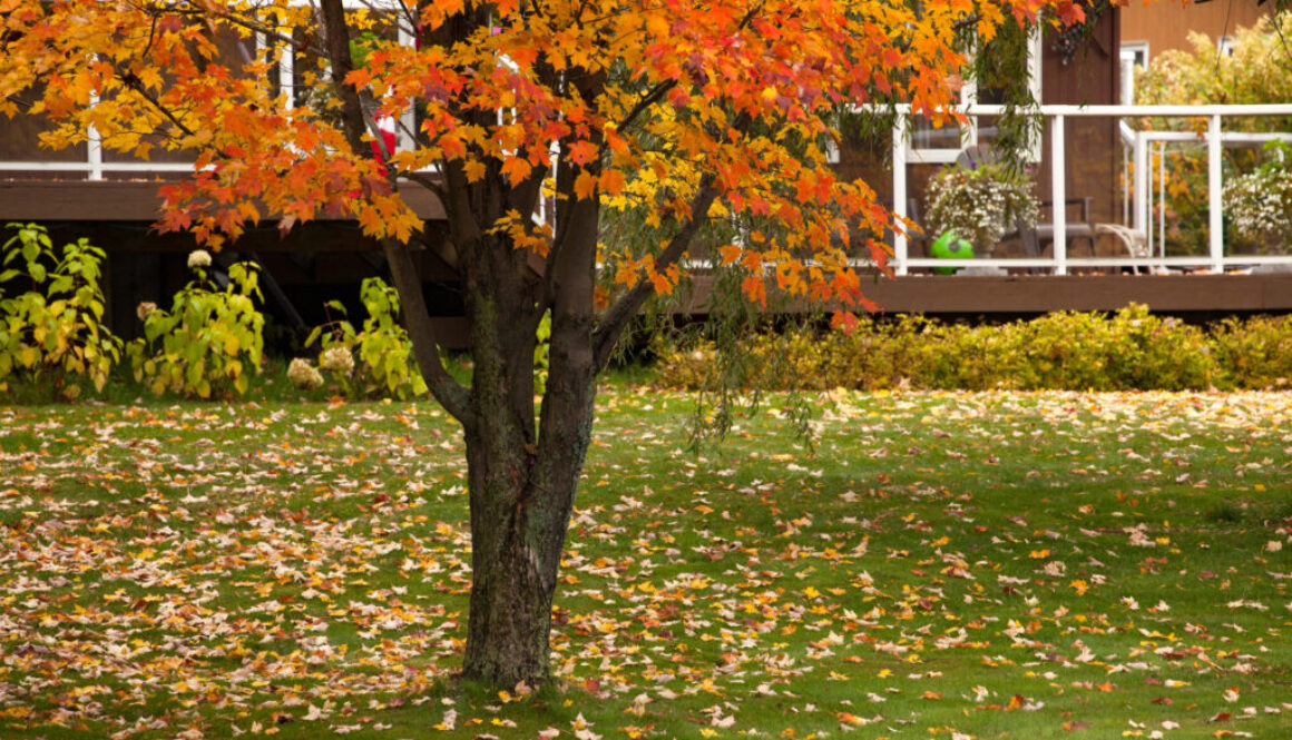 Fall in Denver Real Estate